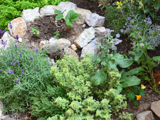 Permaculture element - herb spiral