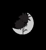 Resilient Birth & Botanicals